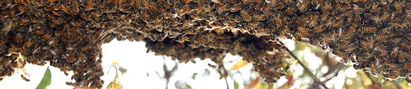 queensVillageSwarm_1